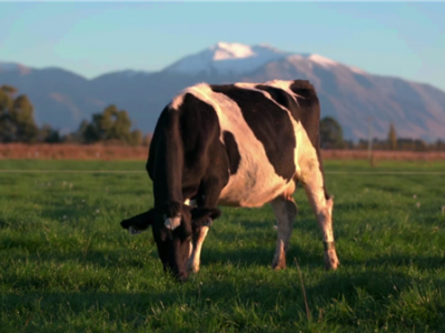 a2牛奶公司:出口中国奶粉进行每批核酸检测 确保产品安全